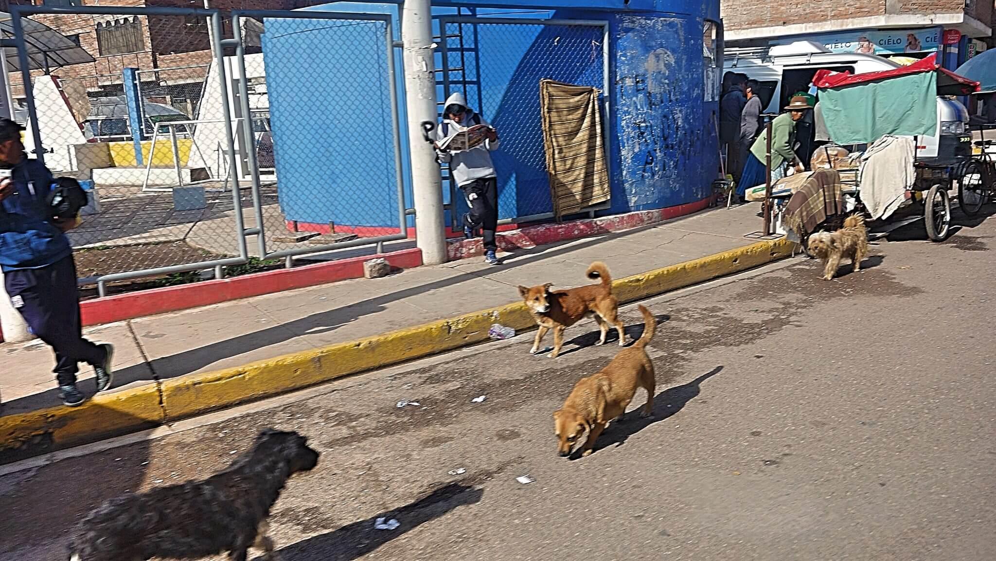 集団で動く犬は注意が必要